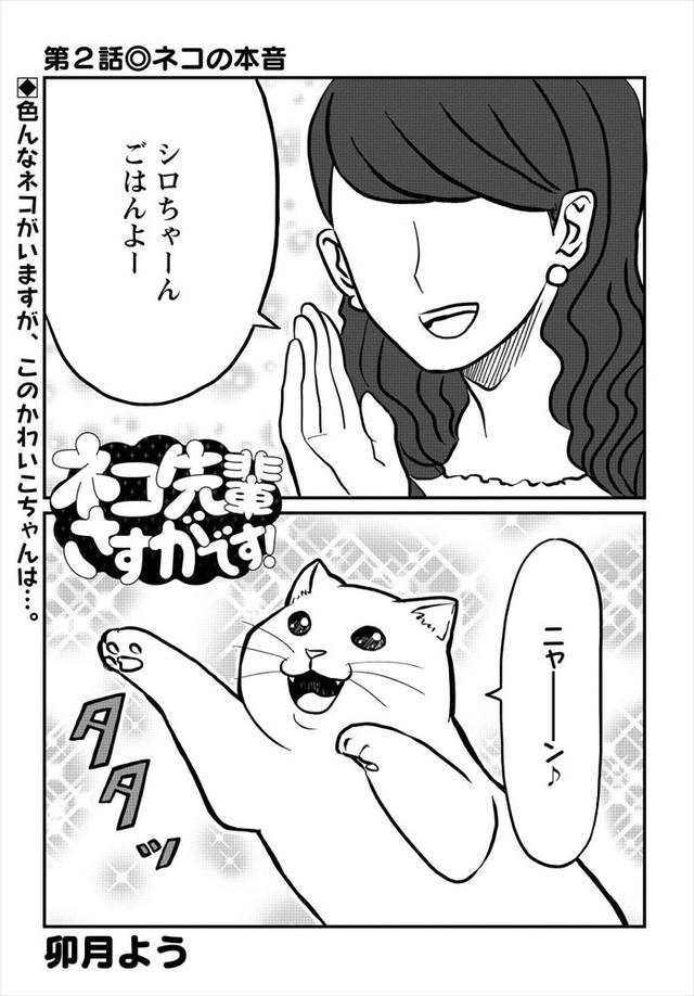 「ネコ先輩さすがです!」より。