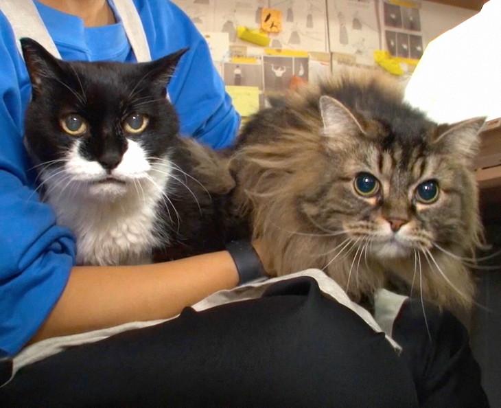 こざき亜衣の仕事場の猫。(写真提供:NHK)
