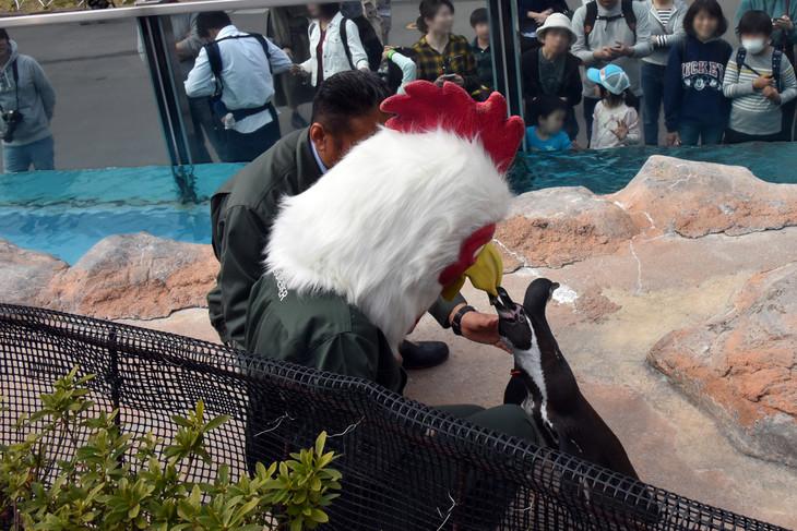 板垣巴留が被っているレゴムの被り物のくちばしに噛み付くペンギン。