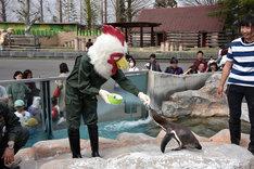 ペンギンにエサをあげる板垣巴留。