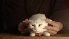 「我が道よ2015」 (c)2015「続・猫侍」製作委員会