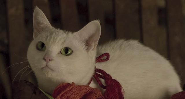 「猫侍 南の島へ行く」 (c)2015「続・猫侍」製作委員会