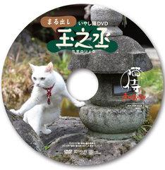 「猫侍 南の島へ行く」入場者プレゼントのDVD「いやし猫DVD まる出し玉之丞」。(c)2015「続・猫侍」製作委員会