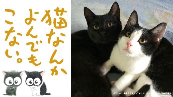 「猫なんかよんでもこない。」クラウドファンディングビジュアル