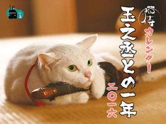 猫侍カレンダー「玉之丞との一年 二〇一六」表紙 (c)2015「続・猫侍」製作委員会