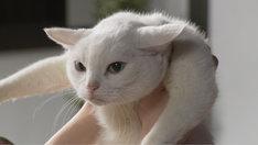 「猫侍 玉之丞、江戸へ行く」
