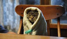 """「世界から猫が消えたなら」より、""""キャベツ巻き""""のシーン。"""