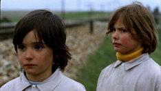 「ミツバチのささやき」 (c)2005 Video Mercury Films S.A.