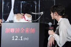 ニャルフォンス役で映画に出演しているぼーちゃんと見つめ合う本田翼。