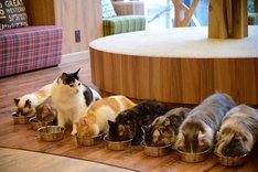 猫カフェ MOCHA 秋葉原店の様子。