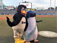左からつば九郎、アデリーペンギン。