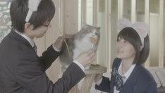 「猫カフェ」
