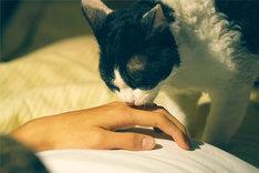 「旅猫リポート」