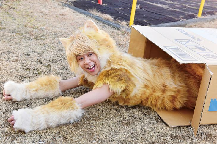 「トラさん~僕が猫になったワケ~」より、北山宏光が演じるトラさん。