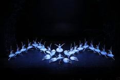 「白鳥の湖」