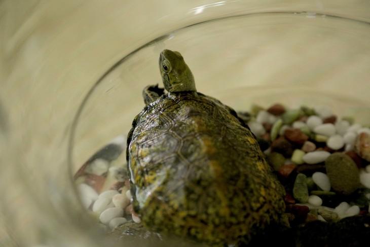 タイトル未定の新作の発表にあわせて解禁された亀の写真。