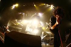 写真は11月26日のZepp Tokyoツアーファイナルの様子。