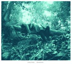 高木正勝が写真を撮影した「dreamtime」のジャケット。
