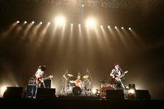 """写真は「ACIDMAN LIVE TOUR """"ALMA""""」日本武道館公演の様子。"""