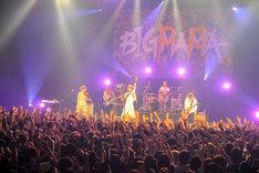 """6月16日に東京・TOKYO DOME CITY HALLで開催された「BIGMAMA Tour 2013 """"ライブ・イズ・ミルフィーユ""""追加公演‐父の日だけにBIGPAPA‐」の模様。(撮影:高田梓)"""