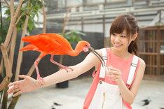 掛川花鳥園で鳥と触れ合う西野七瀬。
