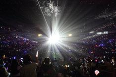 昨年4月に埼玉・さいたまスーパーアリーナで開催された「Koharu Sakurai Presents EXIT TUNES ACADEMY-11th ANNIVERSARY SPECIAL-」の模様。
