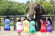 ゾウを眺めるたこやきレインボー。
