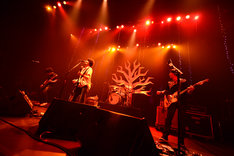 "「the pillows 25th Anniversary NEVER ENDING STORY ""DON'T FORGET TODAY!""」東京・TOKYO DOME CITY HALL公演の様子。 (撮影:橋本塁)"