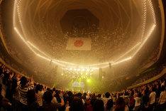 フジファブリック「10th anniversary LIVE at 武道館 2014」の様子。(撮影:河本悠貴)