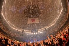 「武道館 DE DISCO!!! ~SUPER DISCO Hits 10!!! the telephones 10th Anniversary~」の様子。(Photo by Kazumichi Kokei)