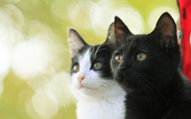 映画「猫なんかよんでもこない。」ビジュアル (C)2015杉作・実業之日本社/「猫なんかよんでもこない。」製作委員会