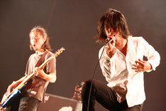 THE BACK HORN(Photo by Shigeo Kikuchi[Showcase])