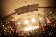 キュウソネコカミのライブの様子。(Photo by HayachiN)