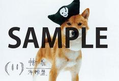 ニューアルバム「海賊盤」をタワーレコードで購入すると先着で配布されるポストカード。