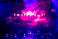 amazarashi「世界分岐二〇一六」中野サンプラザホール公演の様子。(写真提供:ソニー・ミュージックアソシエイテッドレコーズ)