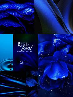 浜崎容子「Blue Forest」イメージ