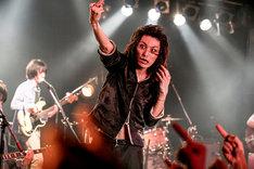 ドレスコーズ「the dresscodes R.I.P. TOUR」神奈川・Yokohama Bay Hall公演の様子。(Photo by HAJIME KAMIIISAKA)
