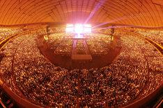 4月1日に行われた「ラブライブ!μ's Final LoveLive!~μ'sic Forever♪♪♪♪♪♪♪♪♪~」の様子。