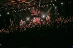フラワーカンパニーズ「夢のおかわり2016」東京・LIQUIDROOM公演の様子。(撮影:柴田恵理)