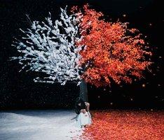 Aimer「茜さす / everlasting snow」通常盤ジャケット