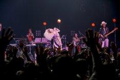 "Chara「""Junior Sweet"" Intimate interlude tour」ツアーファイナルの様子。(Photo by HAJIME KAMIIISAKA)"