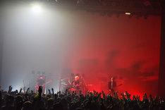 syrup16g「syrup16g tour 2016『HAIKAI』」東京・Zepp Tokyo公演の様子。(撮影:河本悠貴)