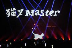 猫叉Master