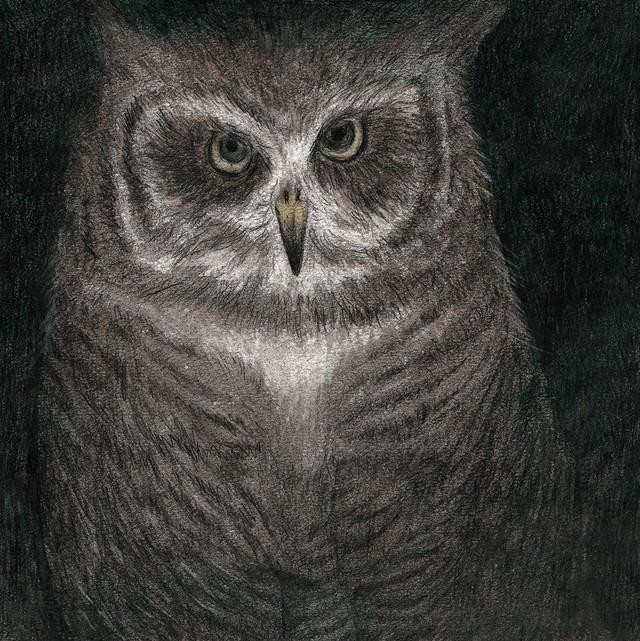 小沢健二「フクロウの声が聞こえる」ジャケット