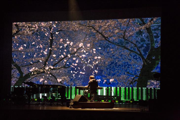 ピアノプロジェクションと共に「sakura wishes」を演奏するまらしぃ。(撮影:石阪大輔)