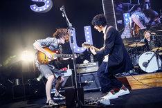 向き合ってギターを奏でる黒田隼之介(左 / G, Cho)と片岡健太(右 / Vo, G)。(撮影:後藤壮太郎)