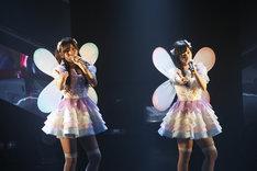 fairy w!nk (c)AKS