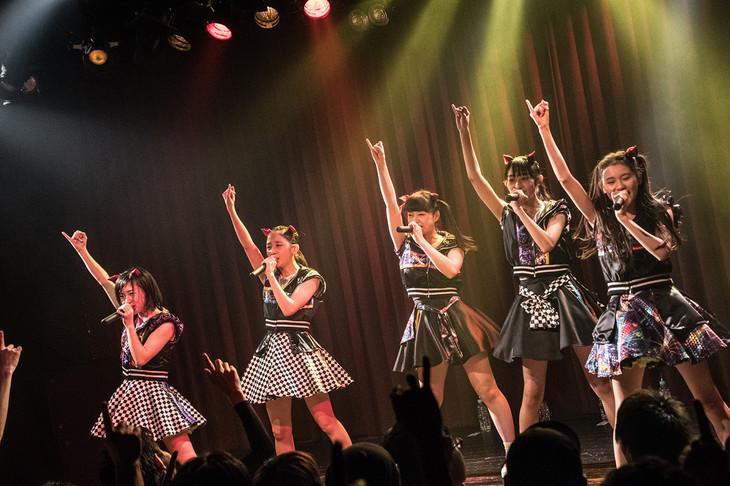 Devil ANTHEM.「桜前線ツアーだったら花吹雪」大阪・Shangri-La公演の様子。(写真提供:エイジアプロモーション)