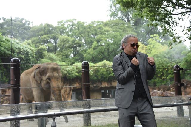 レイザーラモンRGと象。