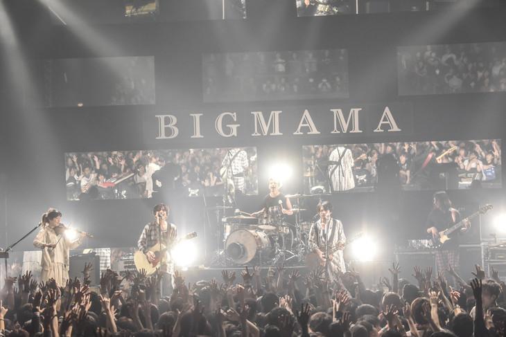 BIGMAMA「+11℃」東京・マイナビBLITZ赤坂公演の様子。(撮影:高田梓)